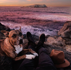 Dog with owner by the sea