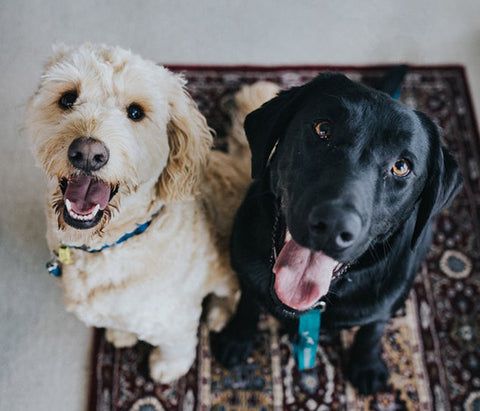 Smiling Dog Friends