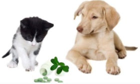 Dog and cat with supplements