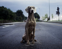 Dog in the street