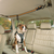 Auto Zip Line Dog Leash Connection for Car Travel