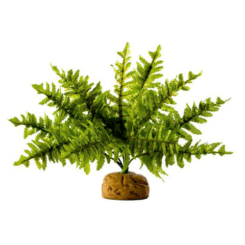 Boston Fern Silk & Plastic Realistic Artifical Plant Reptile Habitat Decor
