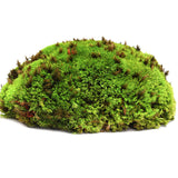 All Natural Living Frog Pillow Moss Reptile & Amphibian Substrate