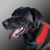 Nite Dawg LED Collar Cover Grey