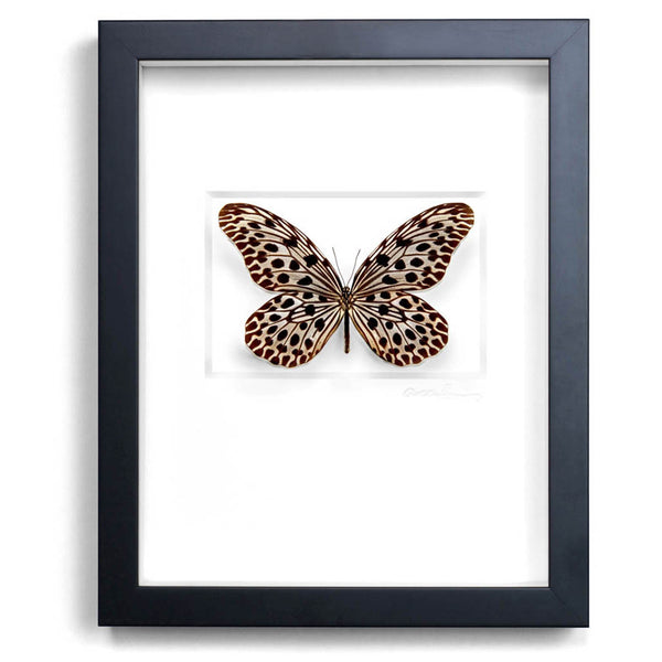 Champagne Ricepaper Butterfly Wall Art