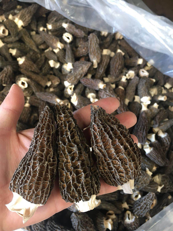 8 Ounces Grade A Dried Morels/S&H Included