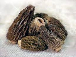 1 Pound Frozen Morels/S&H Included