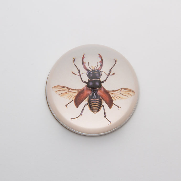 Brown Insect - Crystal Dome Decoupaged Paperweight