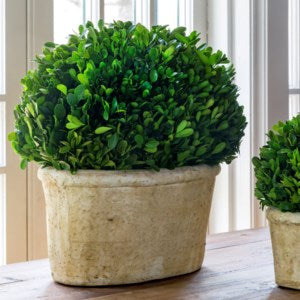 Large Potted Oval Boxwood Large