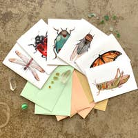 Bug Collection - Small Card Package of 6