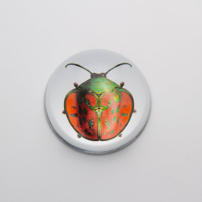 Red and Green Beetle - Crystal Dome Decoupaged Paperweight