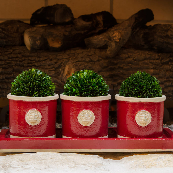 Botanical Collection Three Round Herb Pots with Matching Tray Red