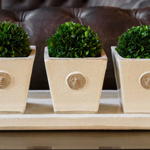 Botanical Collection Three Herb Pots with matching Tray