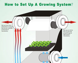 How to Set Up a Growing System
