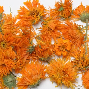 Vibrant Orange Calendula Blossoms Picked