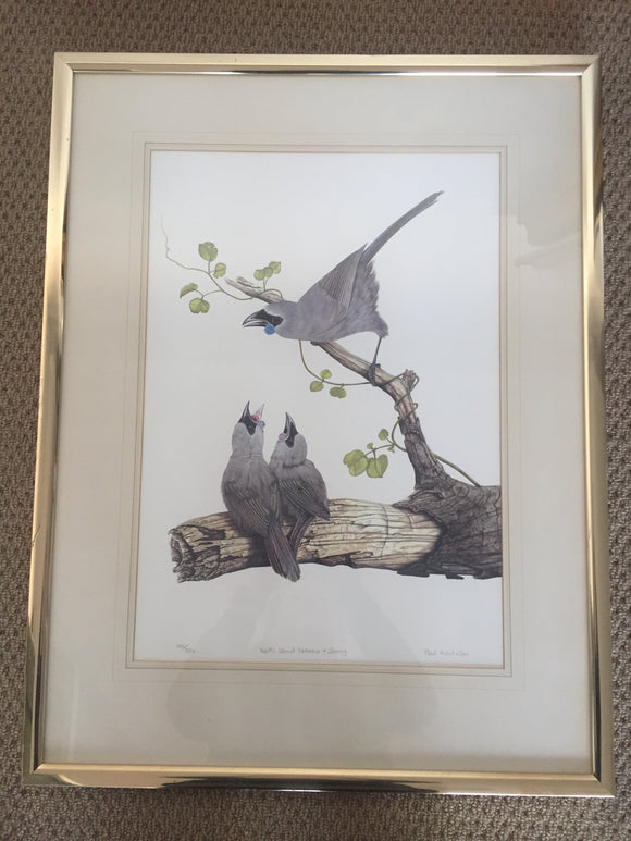 North Island Kokako & Young by Paul Martinson - Limited Edition Print (ref: 6040)