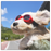 Beautiful dog with glasses -  Canvas Wrap