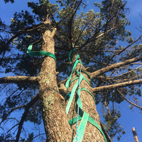 Helicopter Tree Removal - Sling Rigging Technique