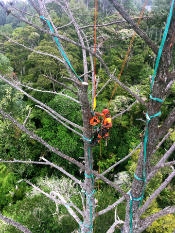 Helicopter Tree Removal - New Zealand Climber