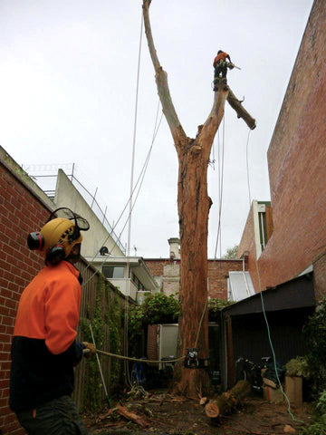 Arborist taking down trunk with lowering device