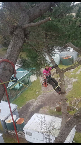 Arborist up pine tree in Victoria Australia with X-Rigging Ring