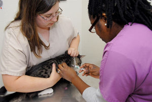 4 Common Diseases if You Don't Vaccinate Your Cats