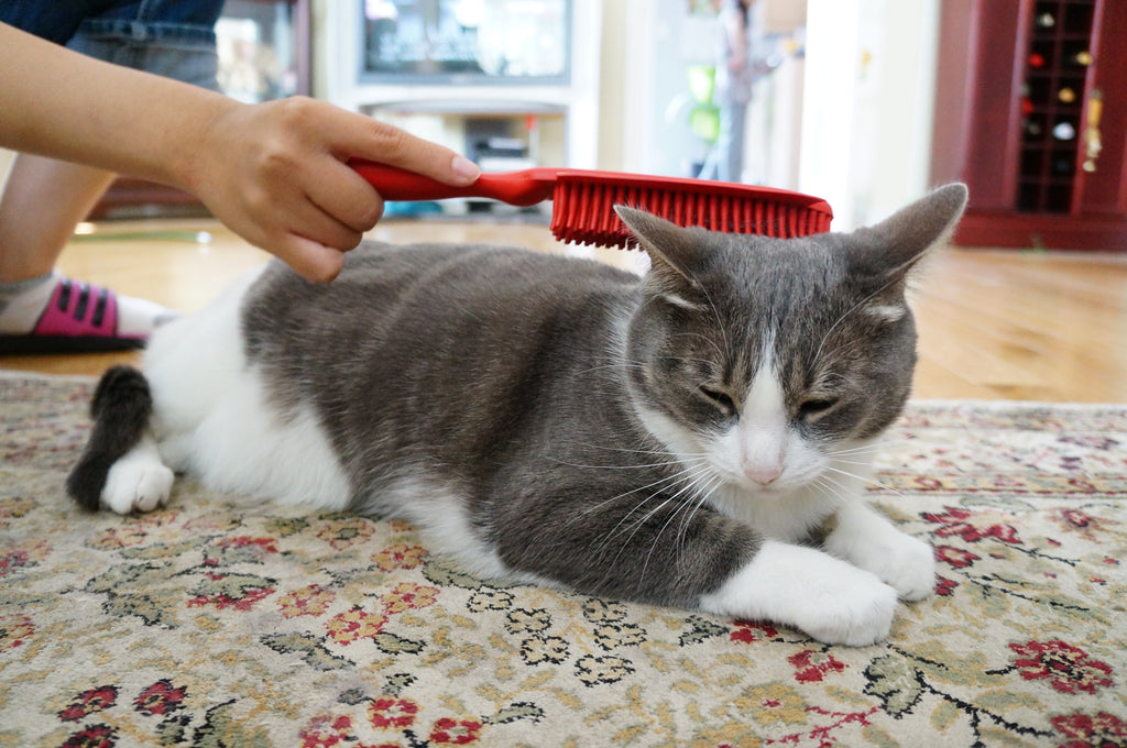 Brush your Cat to Keep it Healthy