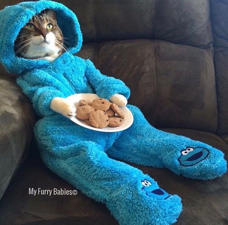 Meet Joey! Cat Who Got Viral on His Cookie Monster Pajamas Costume