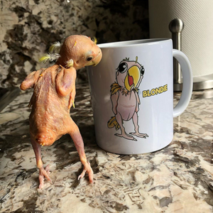 Blondie The Lovebird Official Store