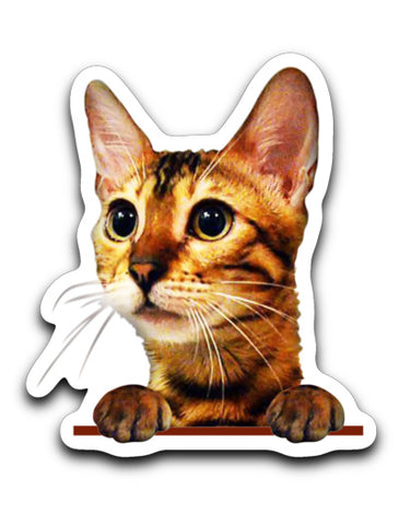 Simba the Bengal Decal Sticker (Only for USA Order)