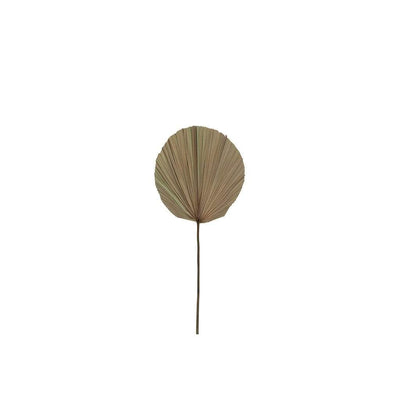 DRIED PALM STEM SMALL - MyHouse