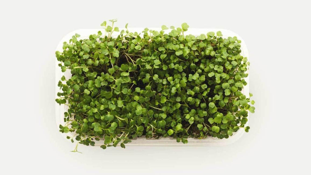 A Guide To Microgreens