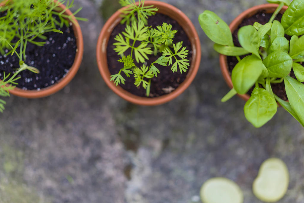 Tips for Cultivating an Eco-Friendly Balcony Garden