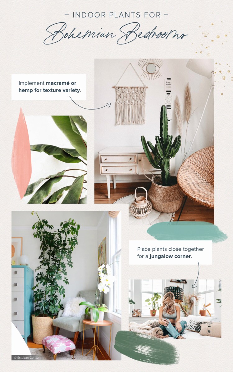 Tips To Spruce Up Your Dream Home With House Plants Ava