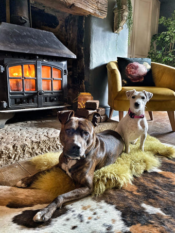 2 dogs in front of a wood burning stove