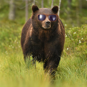 The Great Grizzly Blend Strong, Bold Specialty Coffee Blend Spectacled Bear Coffee - spectacled bear coffee
