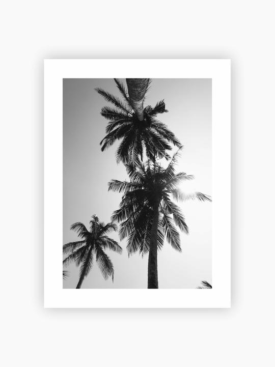 Black & White Palm Trees Poster