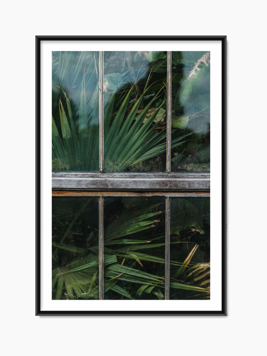 Plants In The Window Poster
