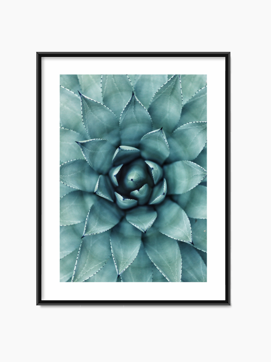 Houseleek Leaves Poster