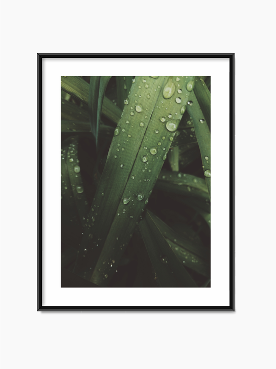 Waterdrops On Leaves Poster
