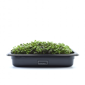 Microgreens Grow Kit by HAMAMA