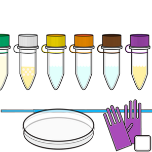 Engineer-it Kit: Genetically engineer safe bacteria to create color & make with biology!