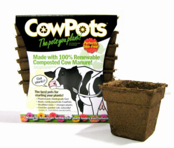 "CowPots™ CP-4-SQ-12PK-12PKS Biodegradable Plant Pots, Square, 4"", 12-Pack"
