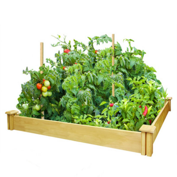 Miracle-Gro® RCMG4S4B Cedar Raised Garden Kit, 4' x 4' x 5.5""