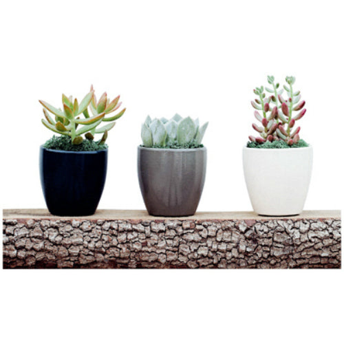 Arizona East NDSES030DO012 Succulent Essentials, 3""