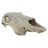 Rustic Weathered Animal Skull