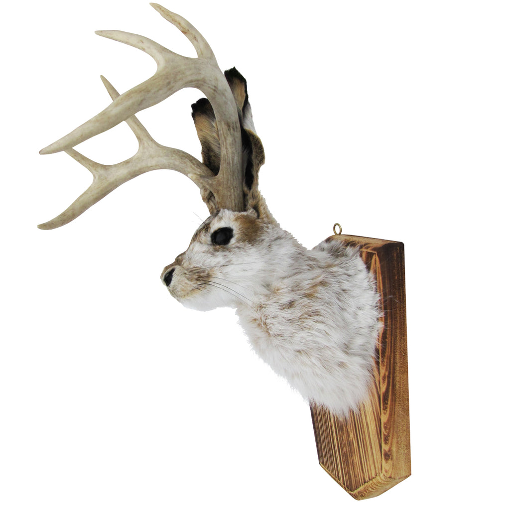 100 Genuine Animal Taxidermy Life Size Jackalope Head