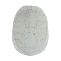 Cast Sea Turtle Shell Wall Decor