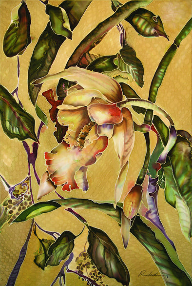 Stanhopea Orchid