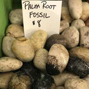 Palm Root Fossil